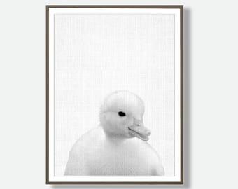 Nursery Duckling, Farm, Duck Wall Art, Nursery Animal Print, Duckling Photography, Duckling Poster Print, Farm Print Decor, Duck Nursery Art