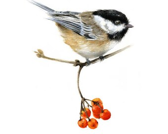 Chickadee Perched on a Branch with Red Berries  - Watercolor Giclee Print Bird Illustration