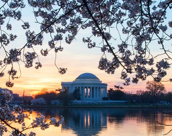 Cherry Blossom Photography Washington DC Photography Print Cherry Blossom Festival Jefferson Memorial Wall decor Tidal Basin Water