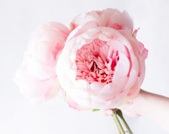 1pc - 9pcs Huge Pink Peony Peonies Silk Flowers Silk Flowers for DIY Wedding Bridal Bouquet Boutonniere Corsage Home Decor