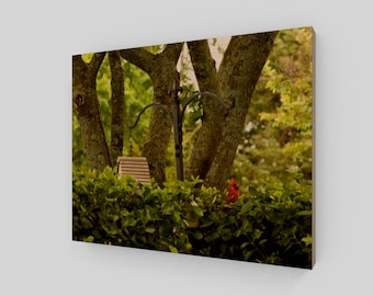 After The Rain / Wood Canvas / Photography / Northern Cardnal / Bird