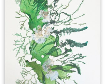 Seaweed art, MADE TO ORDER, Pressed seaweeds, sea fan collage, seaweed pressing, coastal living, beach cottage decor, victorian art, 11x14