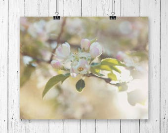 Blooming apple tree fine art photography print, nature photography print, art print, wall art, kitchen art (blooming apple 01)