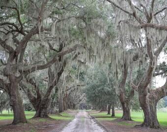 Avenue of Oaks, Tree Photography, South Carolina Photo Art, Charleston Oak Plantation, Charleston SC, Oak Trees on Canvas, Live Oaks