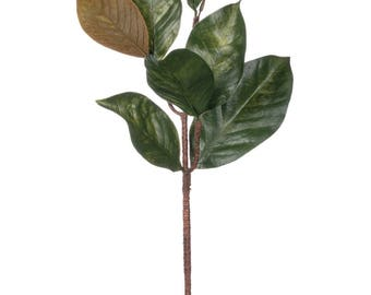 Magnolia with Brown Leaves Stem 27""