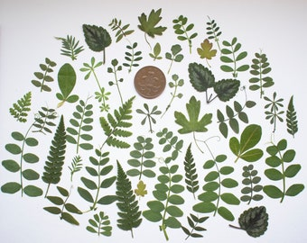 50 Pressed Leaves Green Flowers for Card making Scrapbooking art supplies, craft supplies