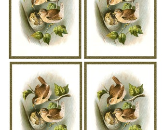 Vintage Pair WRENS feeding 4 CHICKS in NEST - Framed Image Sheet - Digital Instant Download - nature ephemera collage supply
