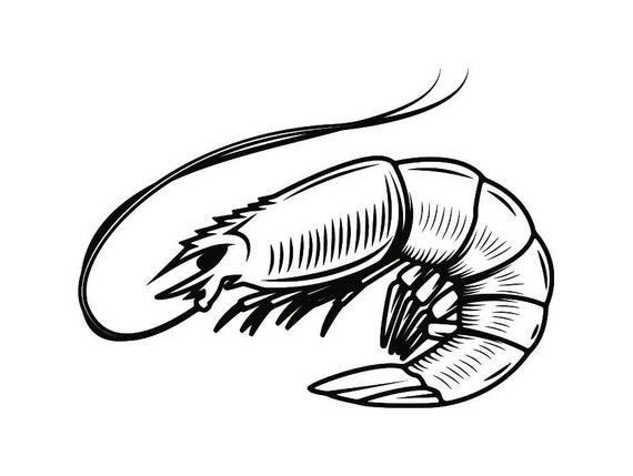 shrimp 3 seafood shellfish fish tank sea ocean animal svg rh etsy com Cute Shrimp Clip Art Shrimp Clip Art Black and White