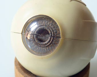 Anatomical model of an eye, plastic, vintage 1960/70, excellent condition