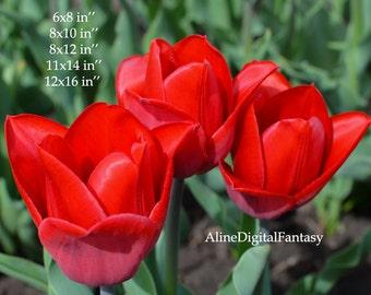 Botanical Photo, Tulip Printable , Tulip Photo, Macro Digital, Tulip Photography, Living Room Decor,  Digital Photo, Instant Download