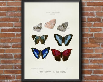 Old vintage Illustrations of insects-Butterfly 7
