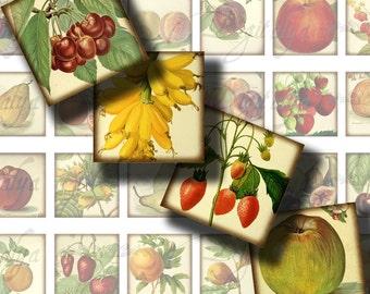 Un Fruit une journée (1) carrés 1 x 1 ou autres tailles disponibles en verre pendentif, feuille de Collage numérique - acheter 3 Get 1 supplémentaire gratuit - tuiles de scrabble