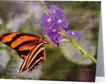 Banded Orange Butterfly - blank note card, Gifts for nature lovers, Gifts for her, gifts for mom, butterfly cards