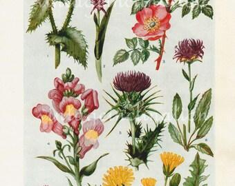 1938 Antique flower art print, Flowers of the Downland, double sided floral bookplate prints, botanical flower art illustration