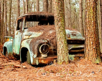 1956 Rusty Ford F100 Truck in trees Photograph 18x 24 special order KAYLA