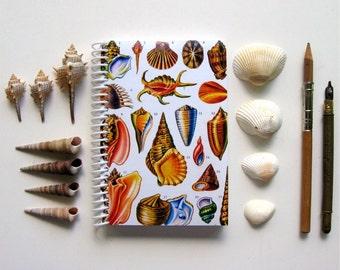 Shells Notebook - A6 Spiral Bound