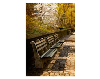Bench in Spring, Central Park, New York City, Landscape Photography, Cobblestone Sidewalk, Flowers, Home Decor, Color Photograph Print