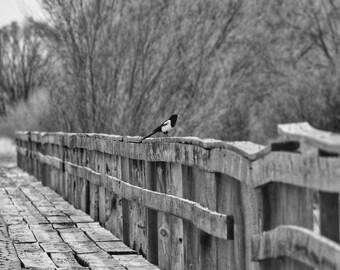 Magpie Bridge black