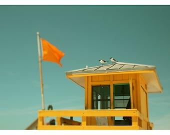 Fine Art Photograph - Beach Photograph - Nature Photograph - Yellow Flag 1 - Florida Art - Home Decor - Nautical Art - Wall Decor - Bird Art