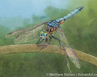 ORIGINAL Watercolor Painting of Blue Dasher Dragonfly, Wall Art, Home Decor, Nature, Wildlife Illustration, Blue Green, Kids, FREE SHIPPING