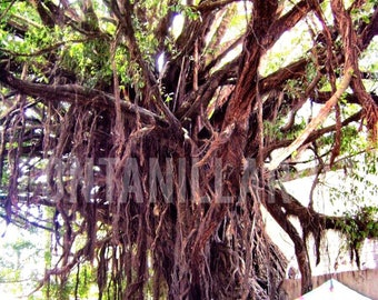 Magical Ancient Tree