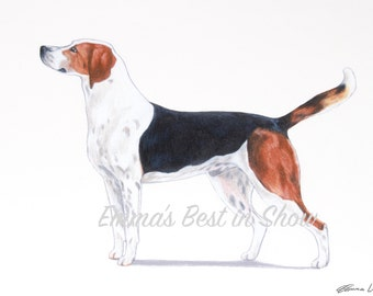 Harrier Hound Dog - Archival Fine Art Print - AKC Best in Show Champion - Breed Standard - Hound Group - Original Art Print