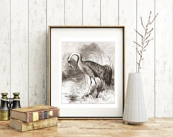 Digital Download Crane 1800s Drawing Print your Own artwork Instant Download Bird Drawing