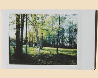 At Dusk - Instant Film Fine Art Photo