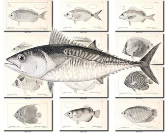 FISHES-43-bw Collection of 150 vintage images Aquarium common species pictures High resolution digital download printable water animals