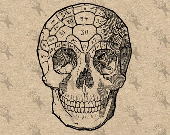 Human Skull Phrenology Vintage retro drawing image Instant Download Digital printable clipart graphic Burlap Fabric Transfer Iron On Decor