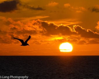 Sunset with Seagull