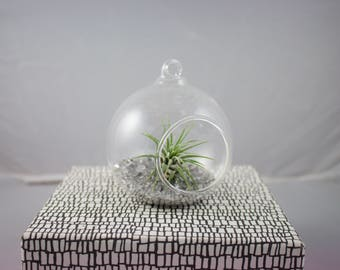 Clear Glass Planter with Air-Plant