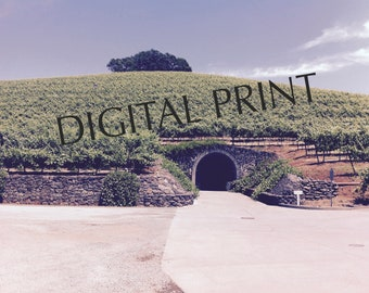 Kunde Winery  (digital photo - vines on a hill - wine cave - Sonoma - Napa)