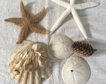 Vintage Beach Decor, Collection of 6 Found Beach Items, Sea Shell, Starfish, Sand Dollars, Pine Cone, Coastal Decor for your Home