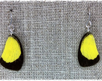 Real Butterfly Wing Jewelry ; Butterfly Wing Earrings; - Yellow and Black Butterfly; Eureme hecabe; Top Wing