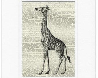 giraffe III dictionary page print