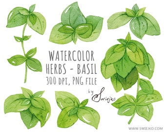 Digital Clipart, Herbs Clipart, Herbs, Floral Clip Art, Watercolor Leaves, Basil, Hand painted