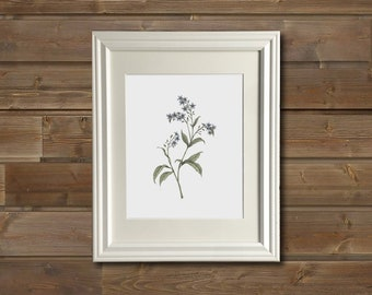 Forget Me Nots  | Framed Art Print