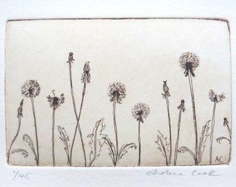 original etching of dandelions