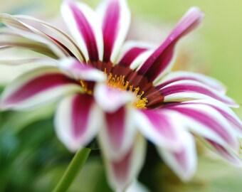 Purple and White Flower, Digital Download, Flower Photography, Digital Screensaver, Printable Art, Wall Art, Cottage Decor, Dreamy Photo