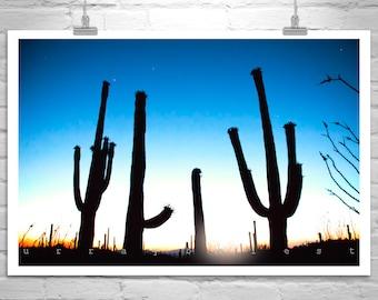 Desert Sunset Cactus Art, Arizona Desert Sunset Print, Cactus Silhouette Art, Cactus Print, Desert Photograph, Tucson Gift, Southwestern Art