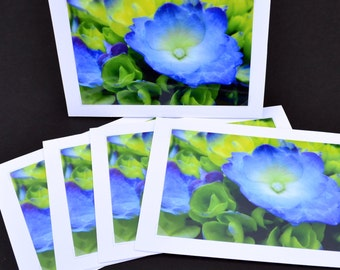Blue Hydrangea -5x7 Blank Greeting Card - Floral Fine Art Photograph