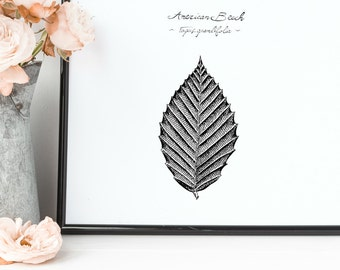 "American Beech Tree Leaf Print | 8"" x 10"" Illustration 