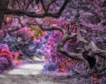 The Magical Forest - Fine Art Photography Gifts