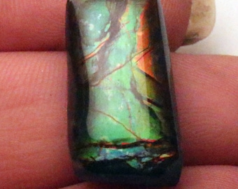 Fantastic ammolite with green and reds  - ammonite shell freeform gem 20 mm X 16 mm depth 6mm 0033