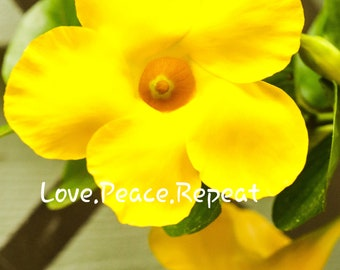 A Cute and Cheerful Bright Yellow Flower.