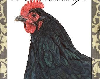 Australorp Hen Notecard: Backyard Chickens Collection