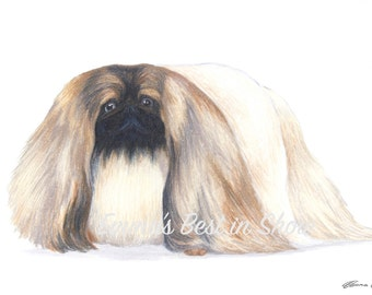 Pekingese Dog - Archival Fine Art Print - AKC Best in Show Champion - Breed Standard - Toy Group - Original Art Print
