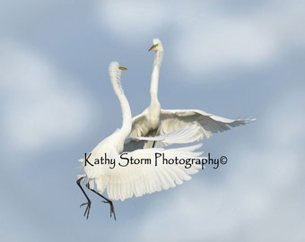 Great Egrets, Florida birds, wildlife photography,  Wedding or Anniversary Gift,  Wall art, home décor.  FREE SHIPPING!