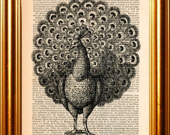 Mono Peacock Engraving  print on vintage (1880's) upcycled french dictionary page mixed media digital print art